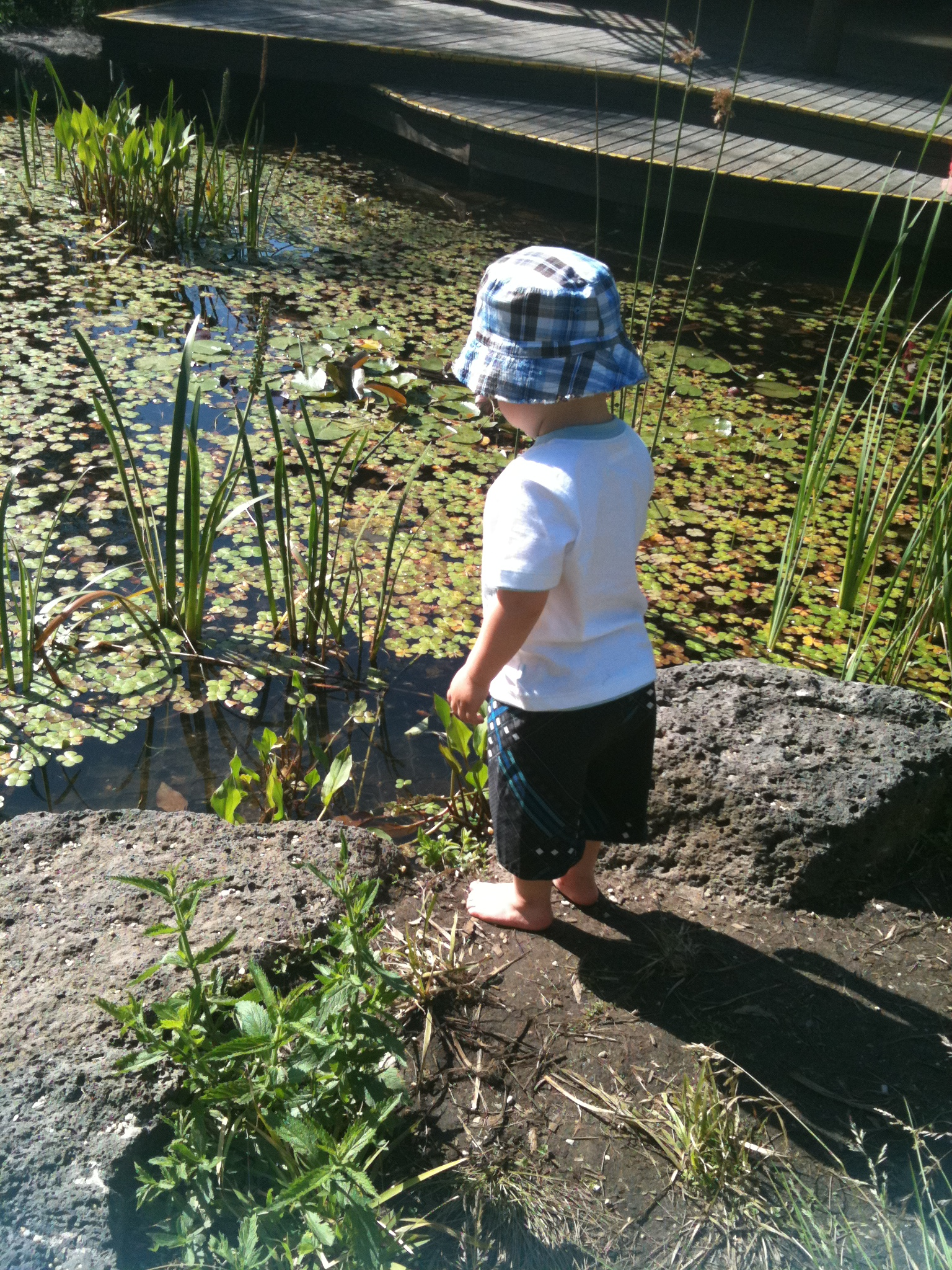 Exploring The Pond