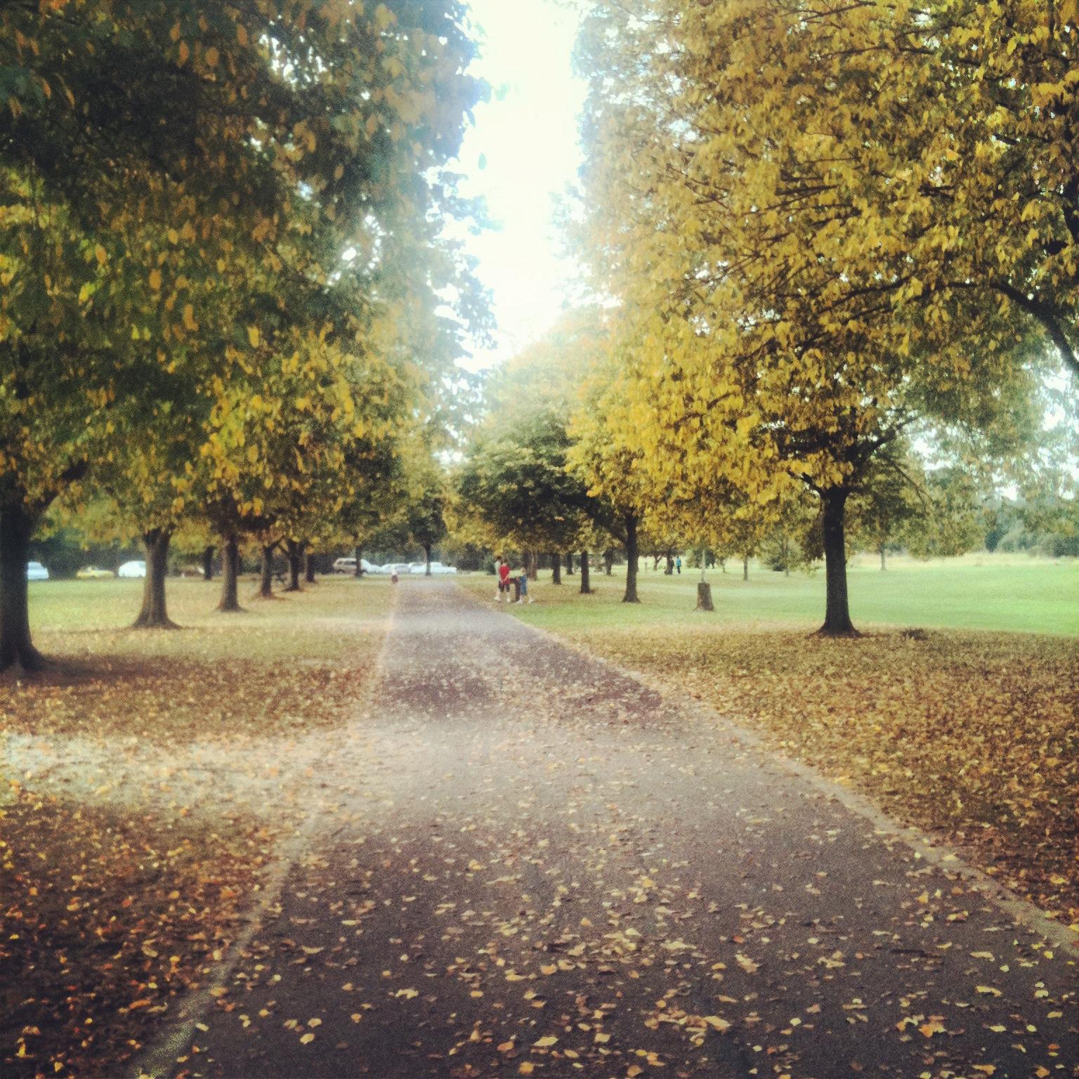 Jells park melbourne victoria australia mid autumn - What time does victoria gardens open ...